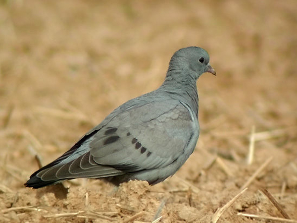 eloigner les pigeons le guide anti pigeon 2018. Black Bedroom Furniture Sets. Home Design Ideas